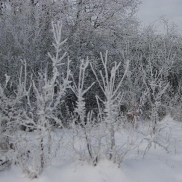 Príroda podbranča počas roka